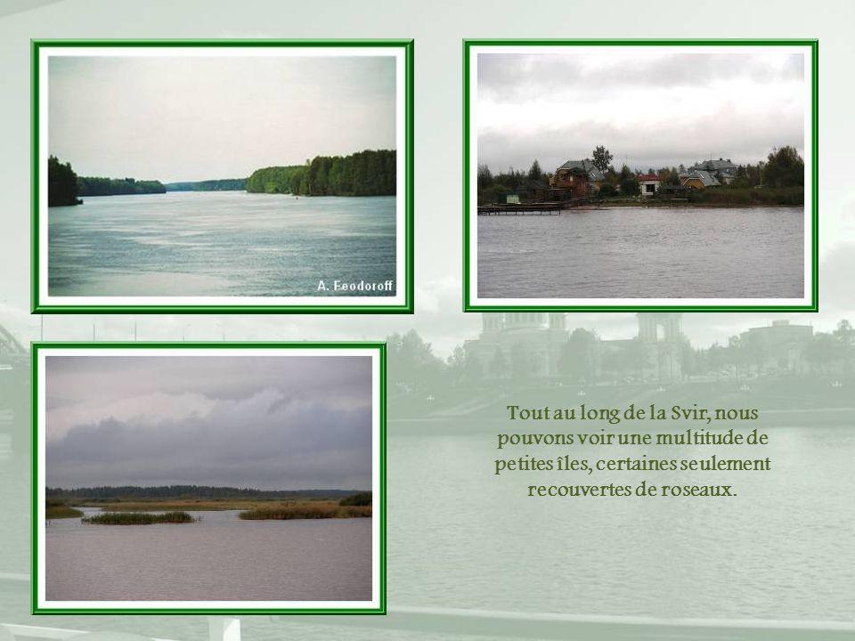 Tout au long de la Svir, nous pouvons voir une multitude de petites îles, certaines seulement recouvertes de roseaux.