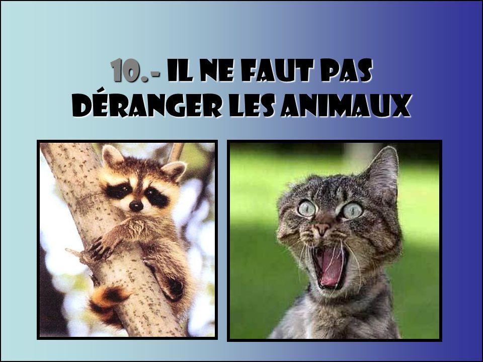 10.- IL NE FAUT PAS dÉranger LES ANIMAUX