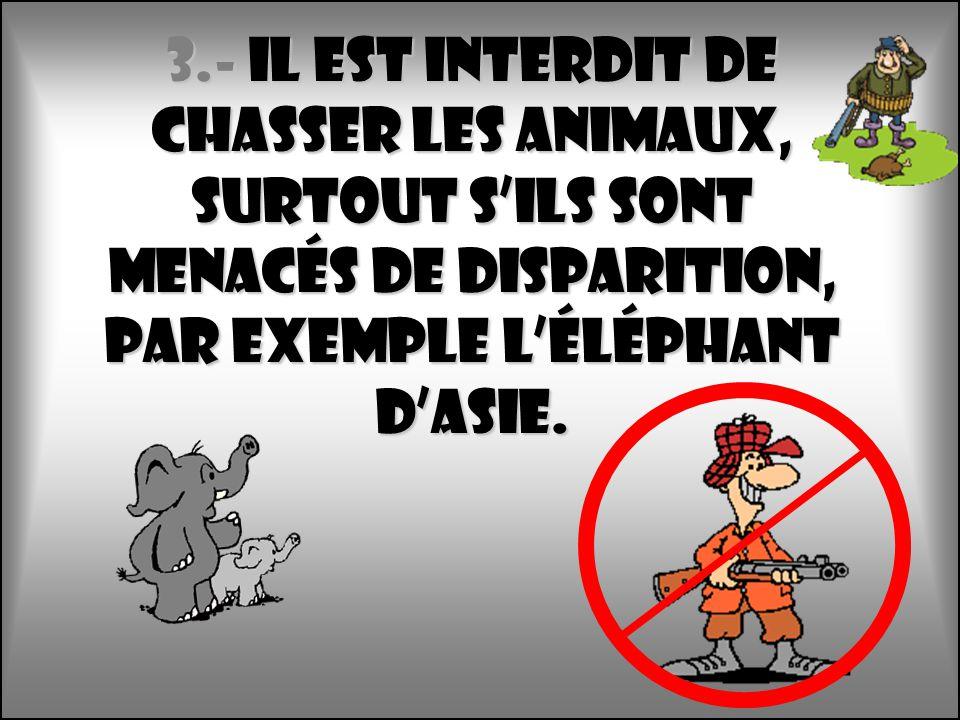 3.- Il est interdit de chasser les animaux, surtout s'Ils sont menacés de disparition, par exemple l'éléphant d'Asie.
