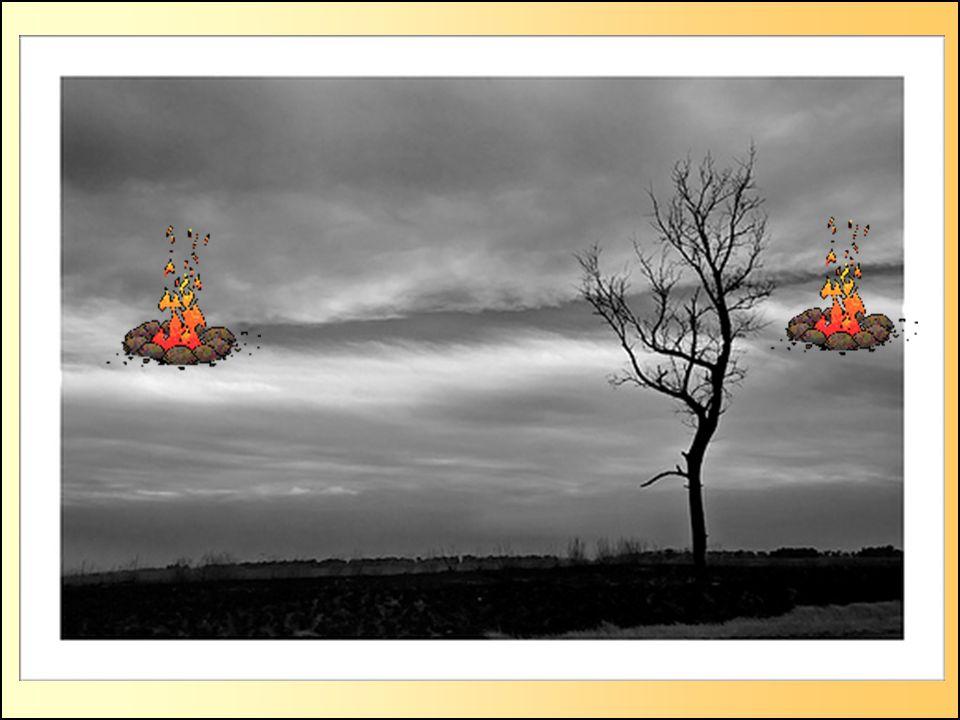 4.- Il ne faut pas allumer des feux.