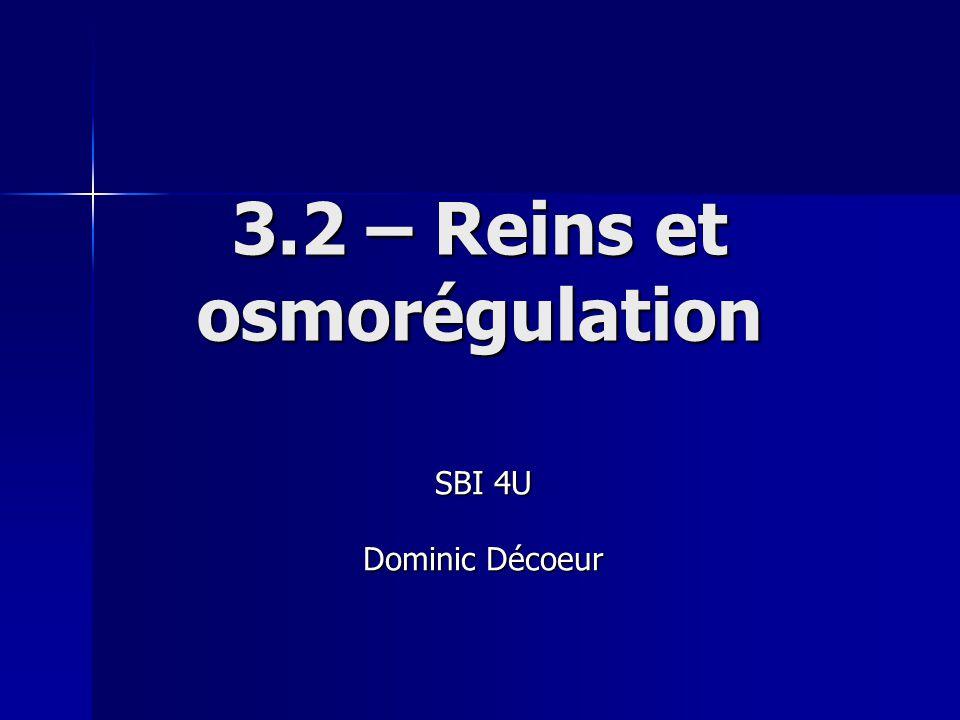 3.2 – Reins et osmorégulation