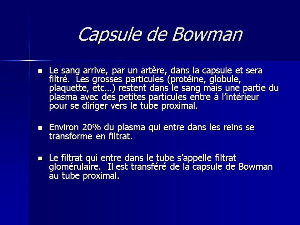 Capsule de Bowman