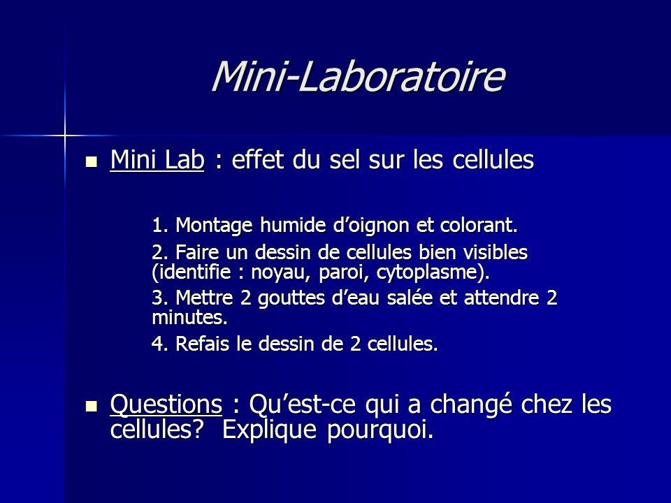 Mini-Laboratoire Mini Lab : effet du sel sur les cellules