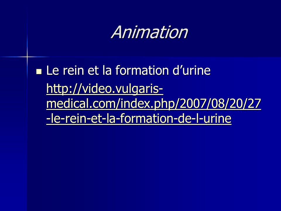 Animation Le rein et la formation d'urine