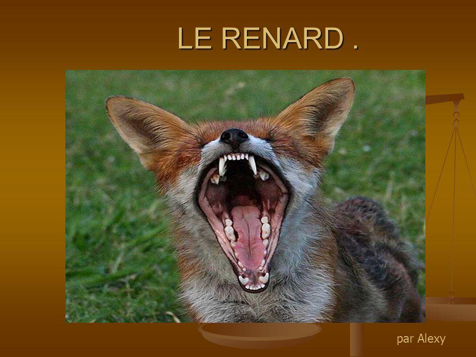 LE RENARD . par Alexy