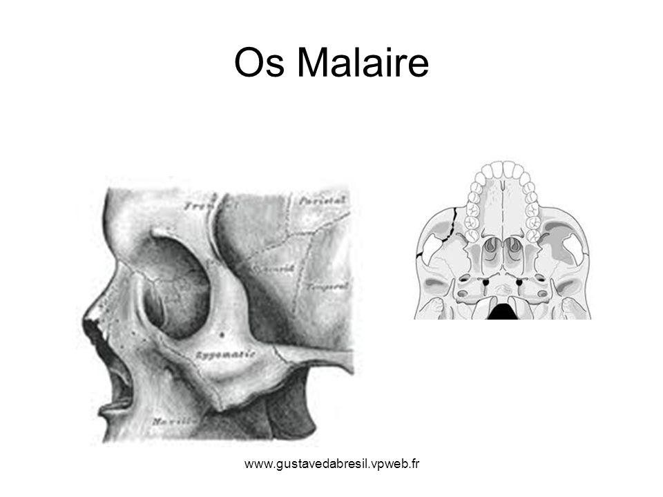 Os Malaire www.gustavedabresil.vpweb.fr