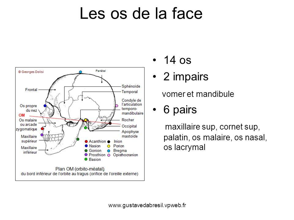 Les os de la face 14 os 2 impairs vomer et mandibule 6 pairs