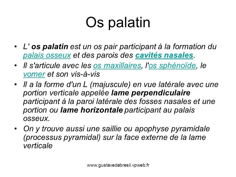 Os palatin L os palatin est un os pair participant à la formation du palais osseux et des parois des cavités nasales.