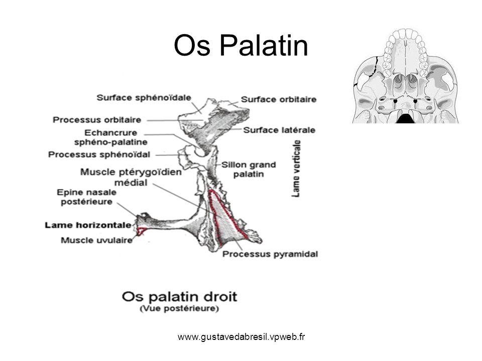 Os Palatin www.gustavedabresil.vpweb.fr
