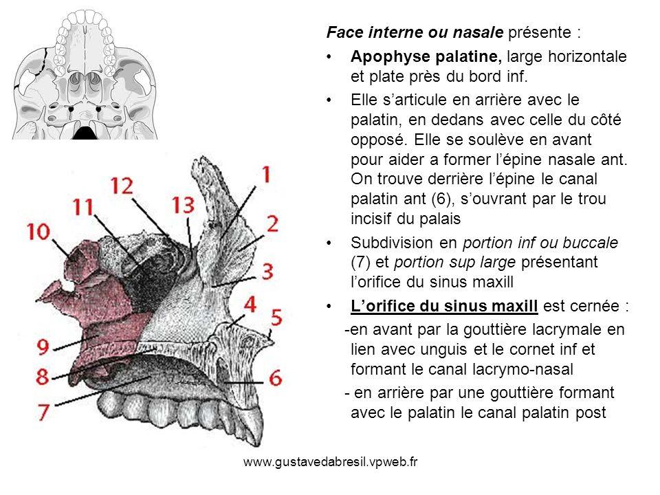 Face interne ou nasale présente :