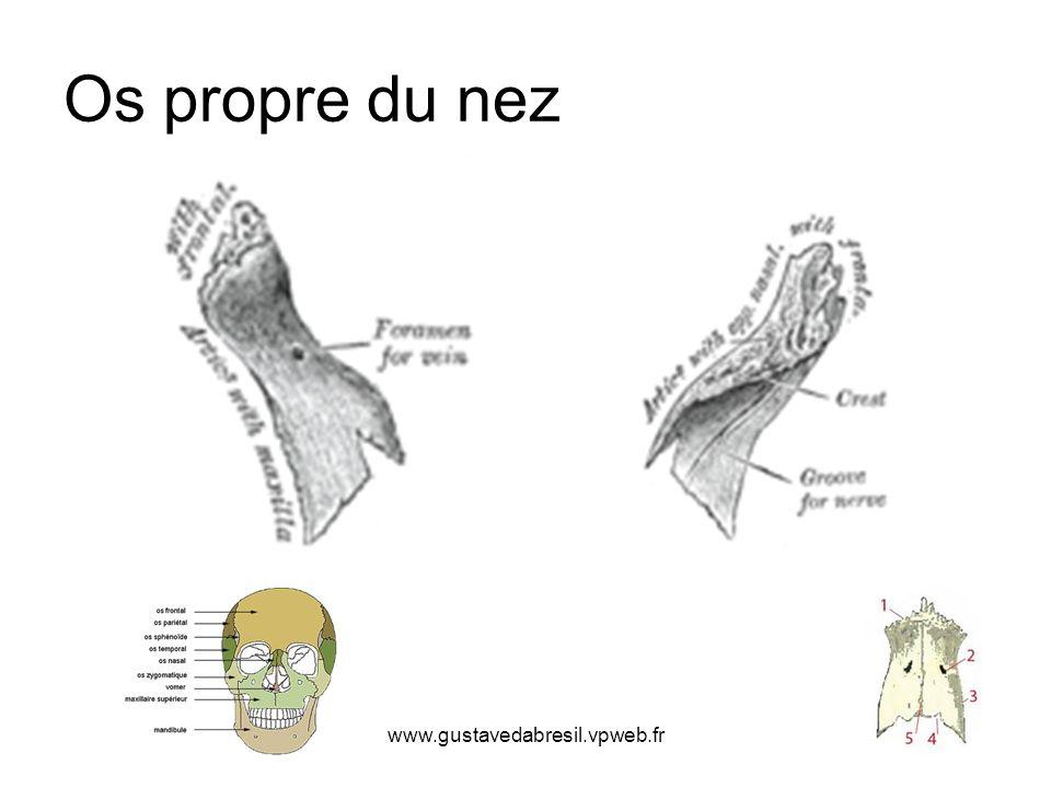 Os propre du nez www.gustavedabresil.vpweb.fr