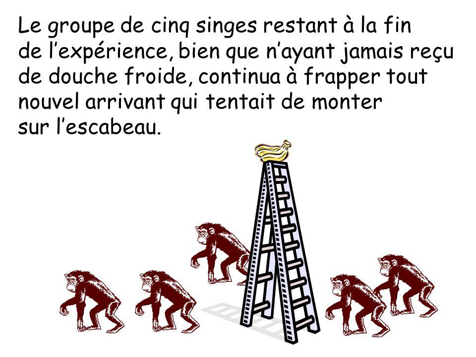 Le groupe de cinq singes restant à la fin de l'expérience, bien que n'ayant jamais reçu de douche froide, continua à frapper tout nouvel arrivant qui tentait de monter sur l'escabeau.