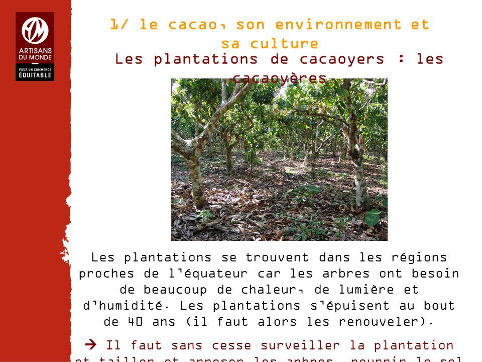 1/ le cacao, son environnement et sa culture