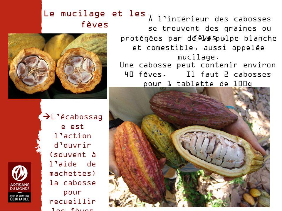 Le mucilage et les fèves