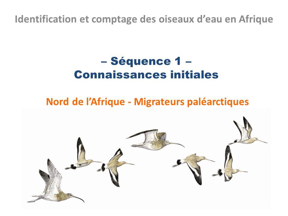 Identification et comptage des oiseaux d'eau en Afrique