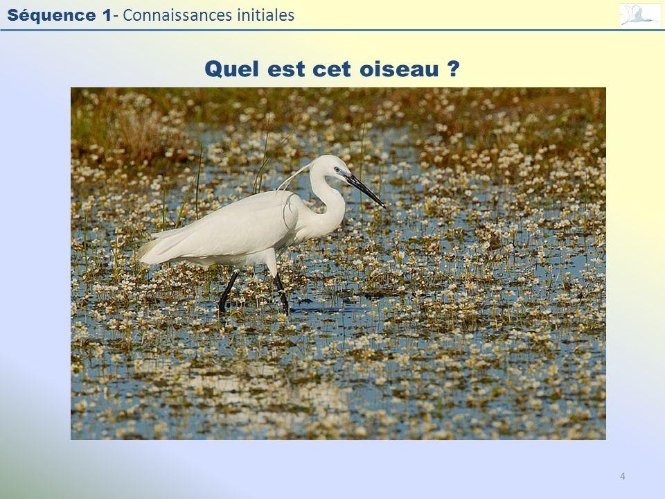 Quel est cet oiseau Photo : Aigrette garzette - Little Egret - Egretta garzetta. Exercice en salle : Quel est cet oiseau