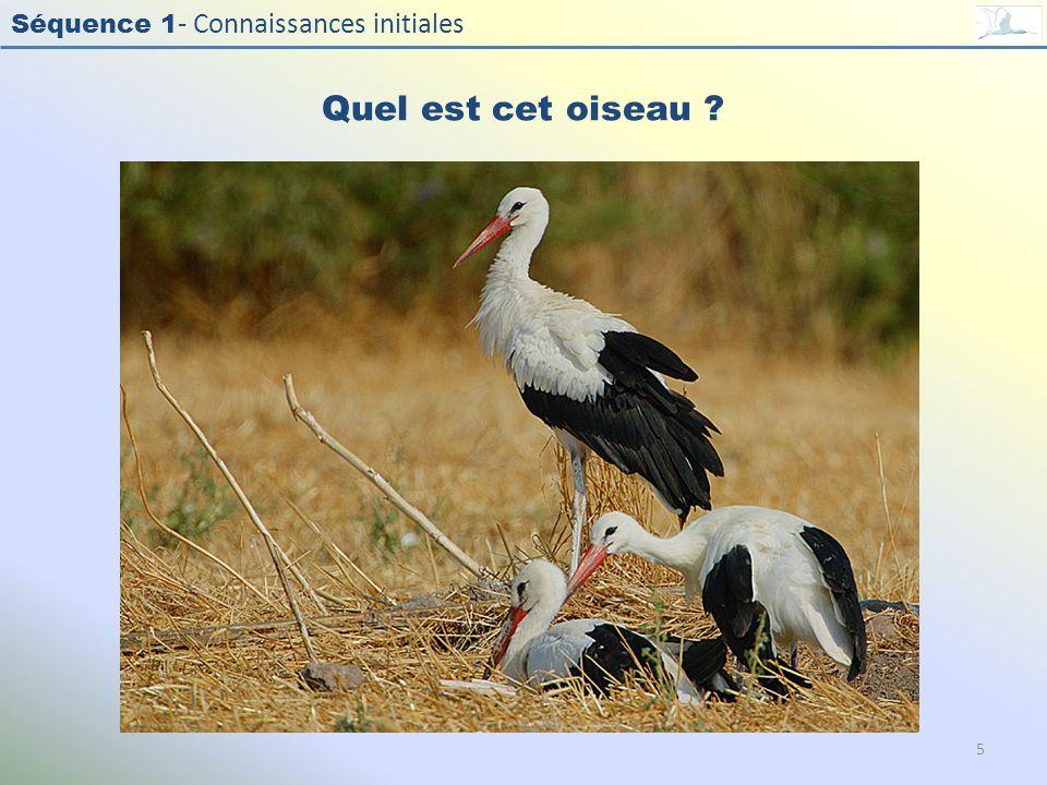 Quel est cet oiseau Photo : Cigogne blanche - White Stork - Ciconia ciconia. Exercice en salle : Quel est cet oiseau
