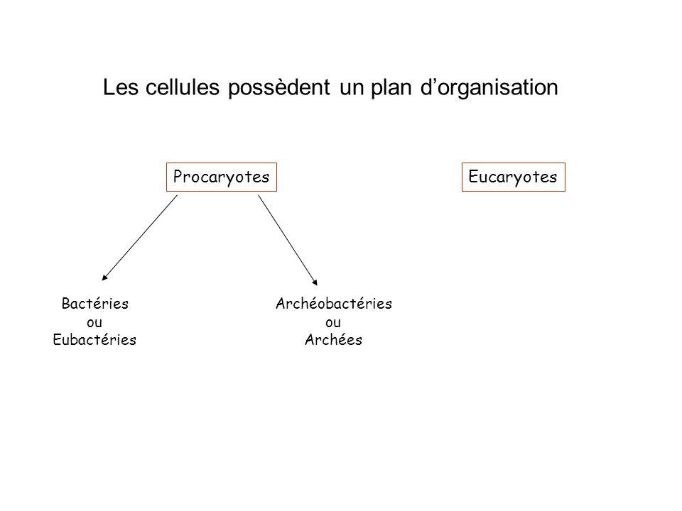 Les cellules possèdent un plan d'organisation