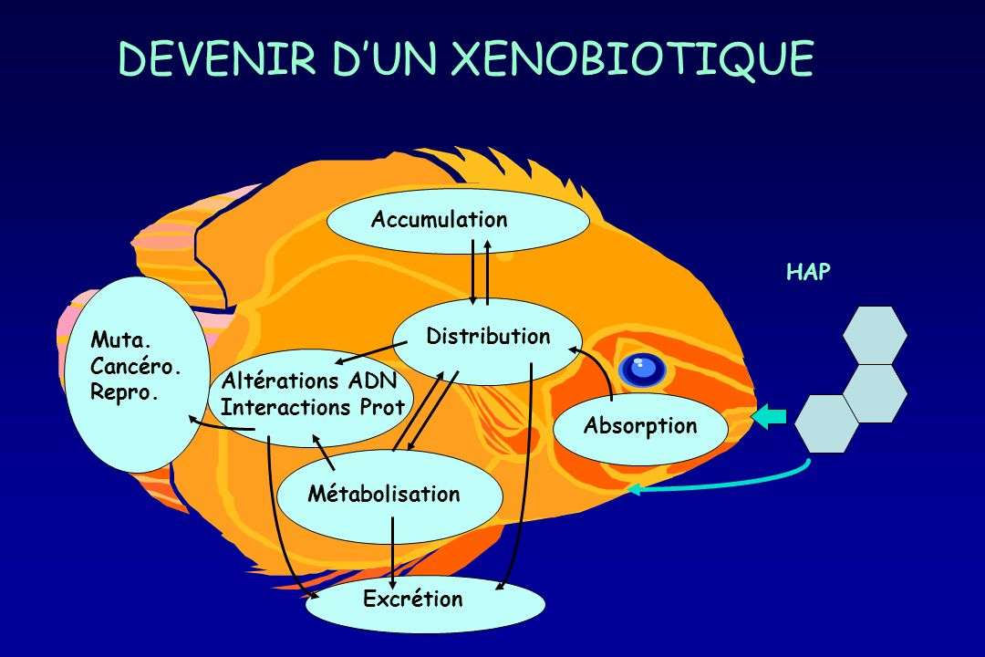 DEVENIR D'UN XENOBIOTIQUE