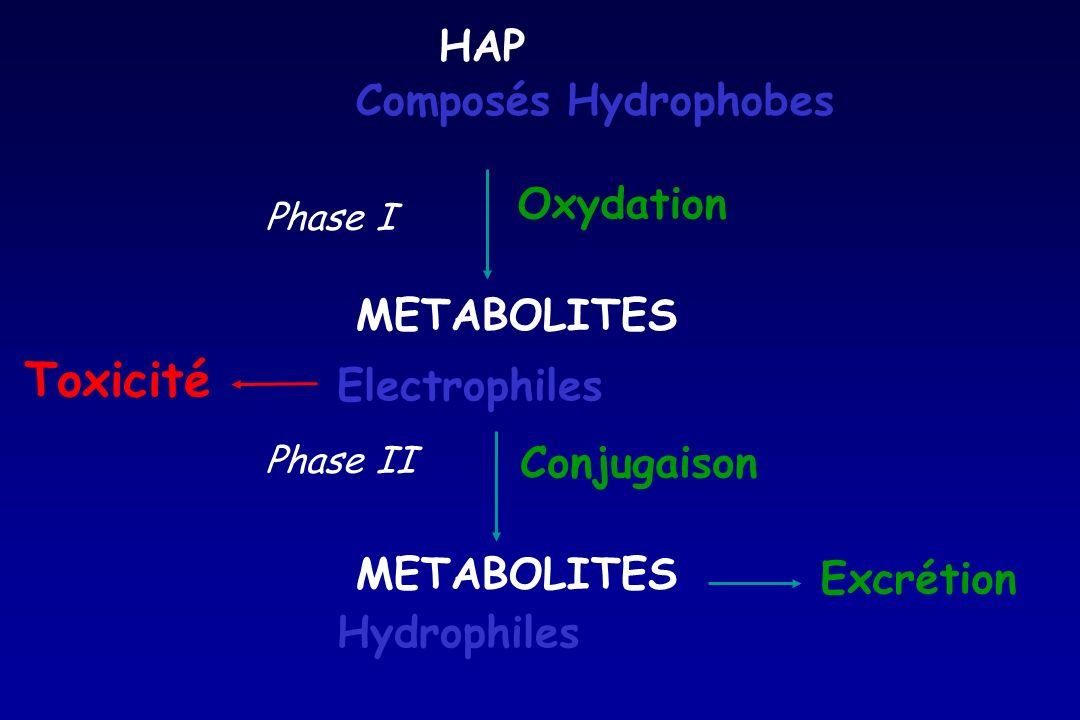 Toxicité HAP Composés Hydrophobes Oxydation METABOLITES Electrophiles