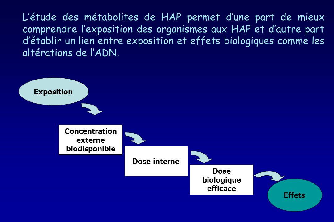 Concentration externe biodisponible Dose biologique efficace
