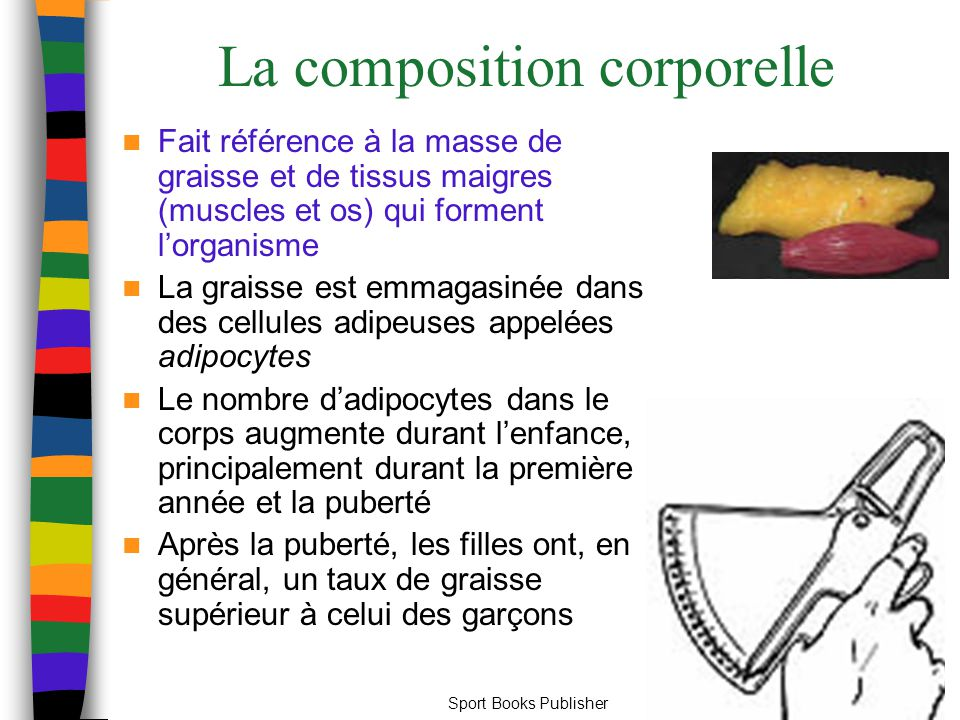 La composition corporelle