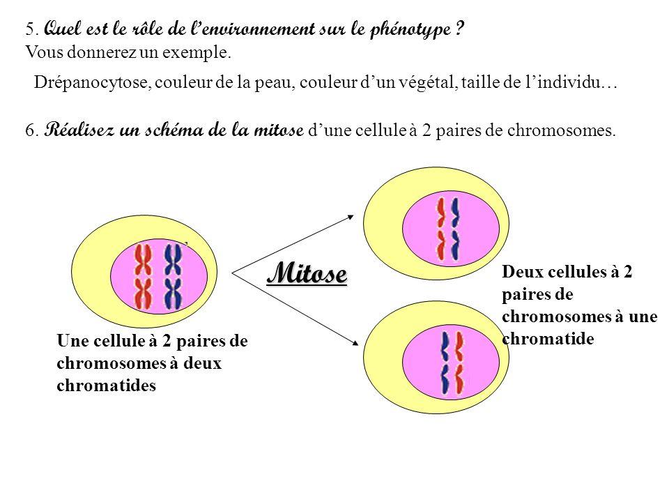 Mitose 5. Quel est le rôle de l'environnement sur le phénotype