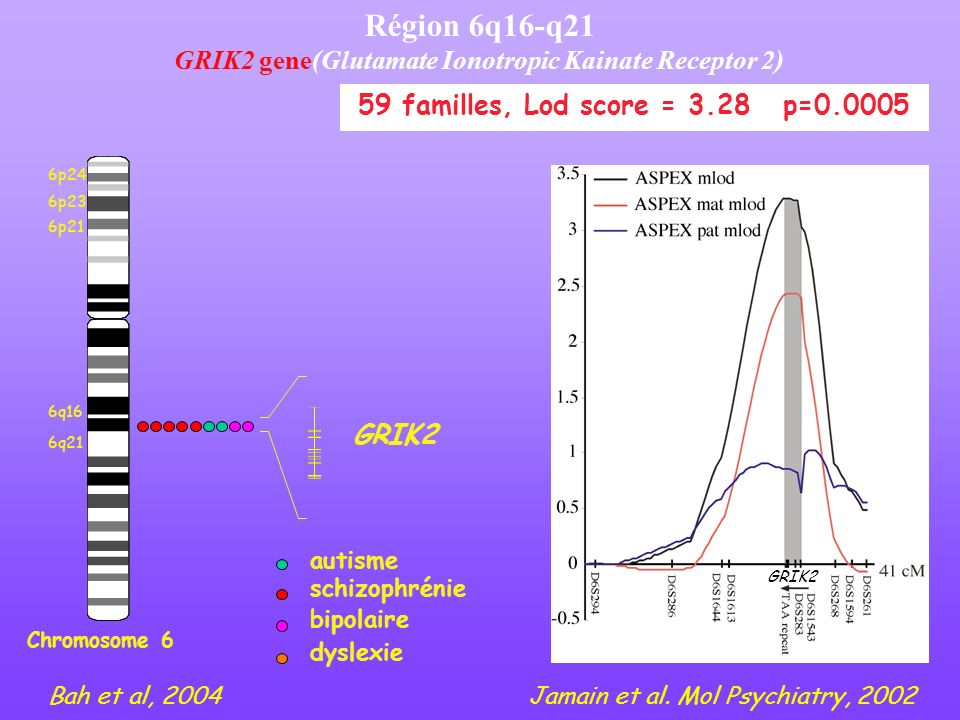 GRIK2 gene(Glutamate Ionotropic Kainate Receptor 2)