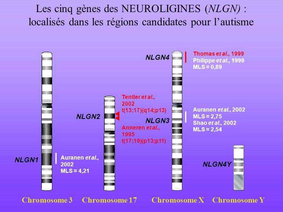 Les cinq gènes des NEUROLIGINES (NLGN) :