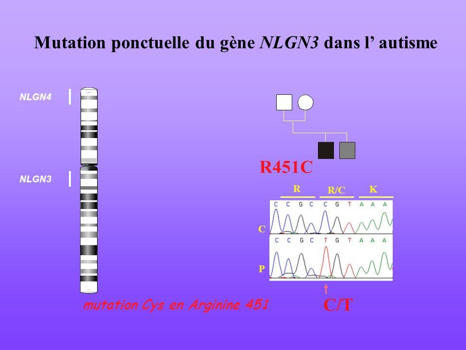 Mutation ponctuelle du gène NLGN3 dans l' autisme