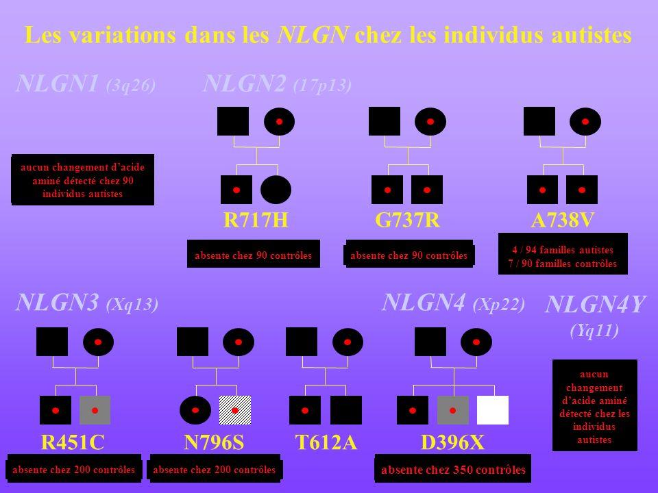 Les variations dans les NLGN chez les individus autistes