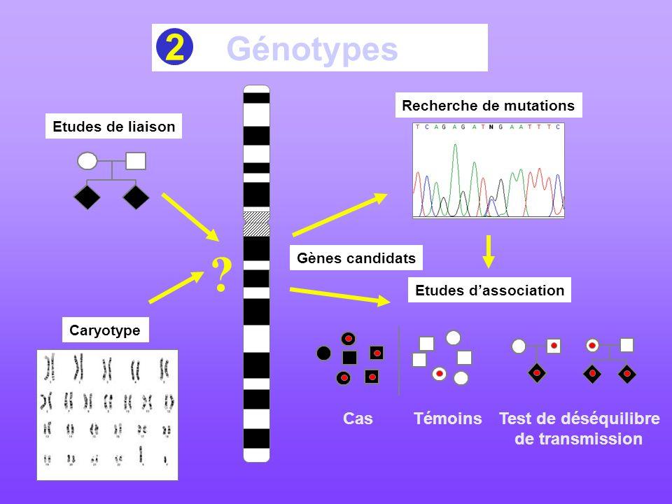 2 Génotypes Test de déséquilibre de transmission Cas Témoins