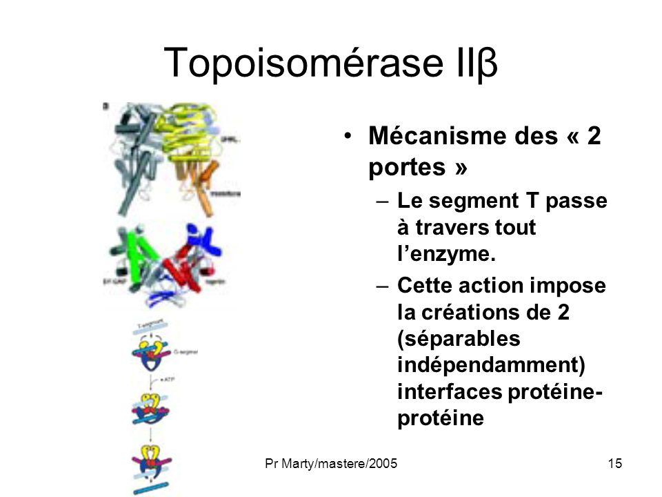 Topoisomérase IIβ Mécanisme des « 2 portes »