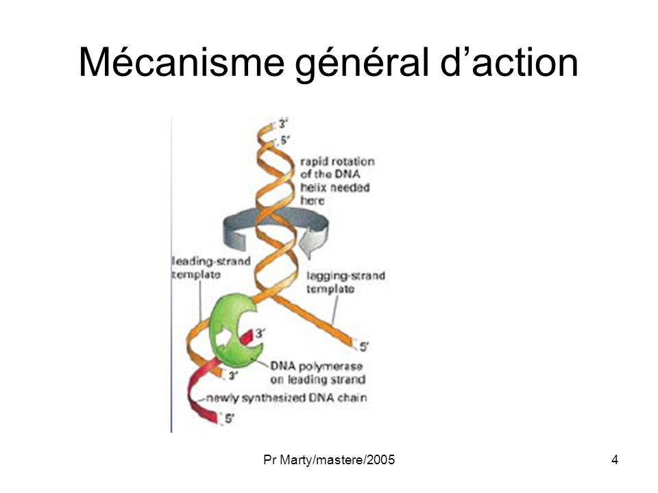 Mécanisme général d'action