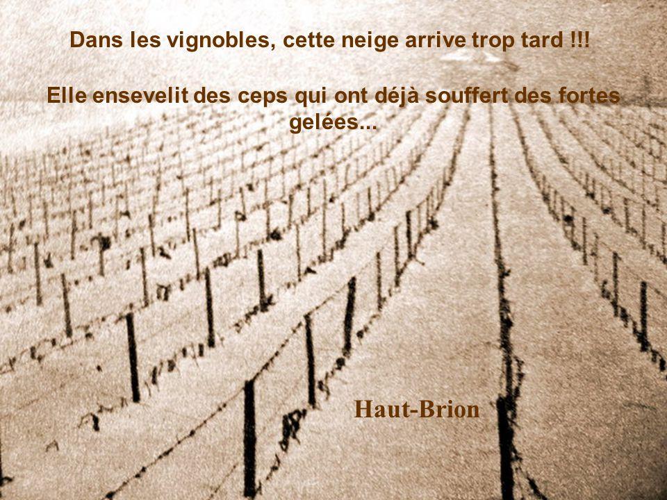 Haut-Brion Dans les vignobles, cette neige arrive trop tard !!!