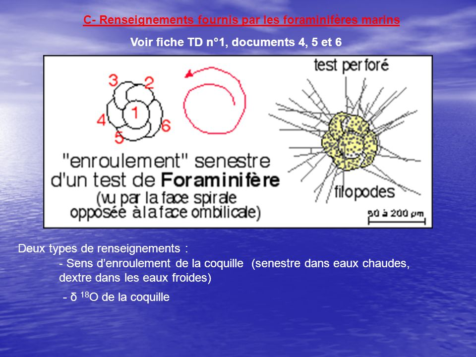 C- Renseignements fournis par les foraminifères marins