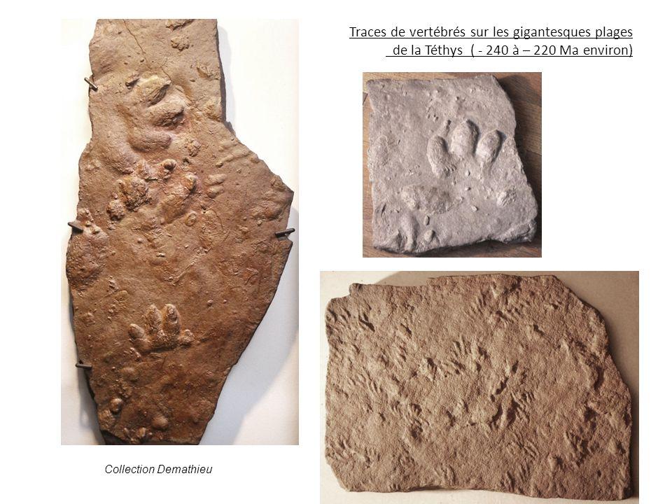 Traces de vertébrés sur les gigantesques plages de la Téthys ( - 240 à – 220 Ma environ)