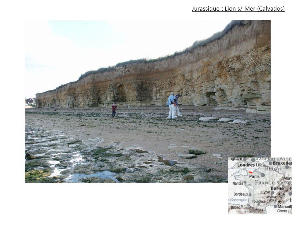 Jurassique : Lion s/ Mer (Calvados)