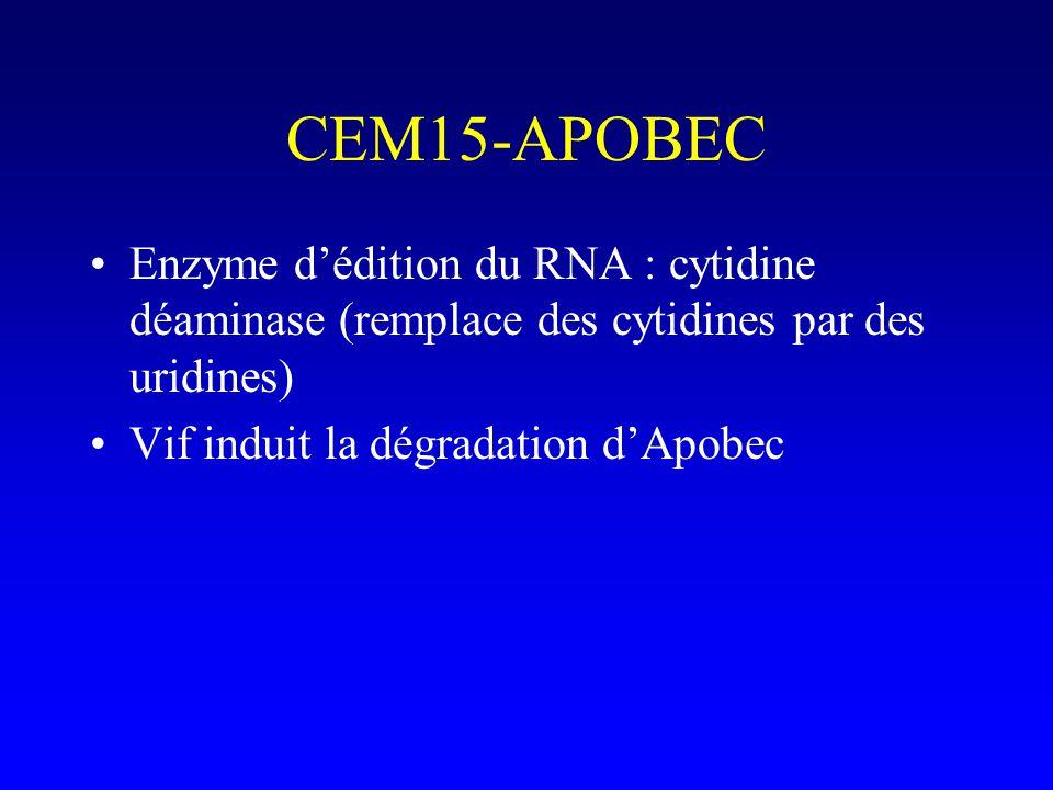 CEM15-APOBEC Enzyme d'édition du RNA : cytidine déaminase (remplace des cytidines par des uridines)