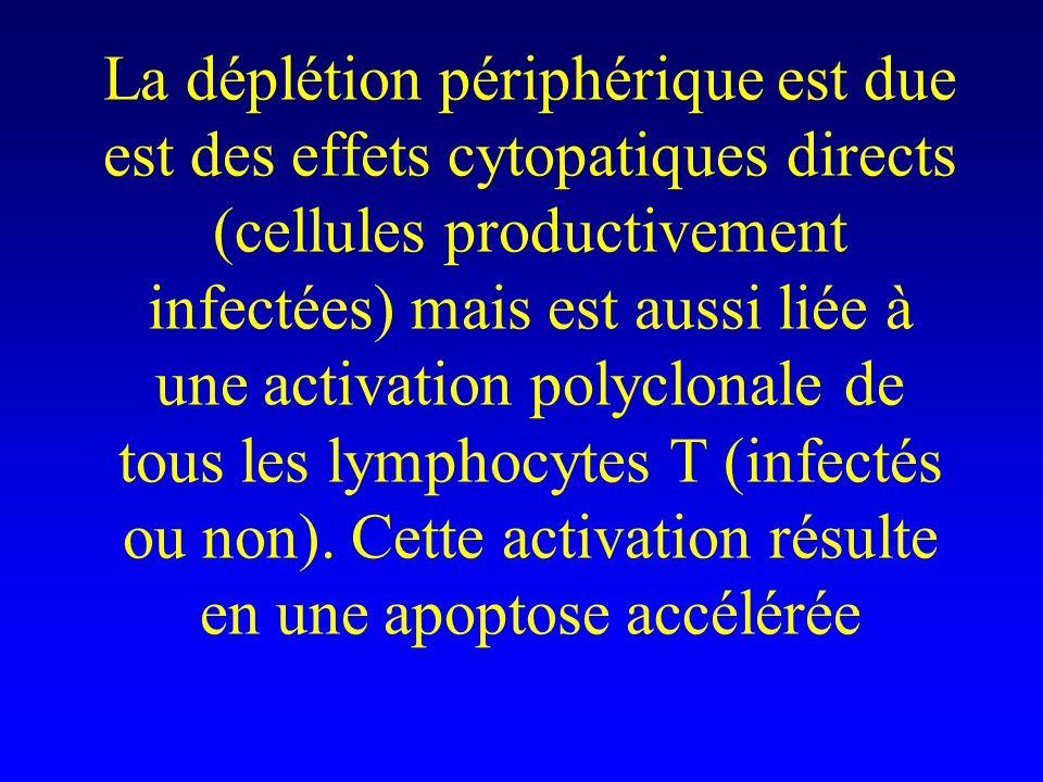 La déplétion périphérique est due est des effets cytopatiques directs (cellules productivement infectées) mais est aussi liée à une activation polyclonale de tous les lymphocytes T (infectés ou non).