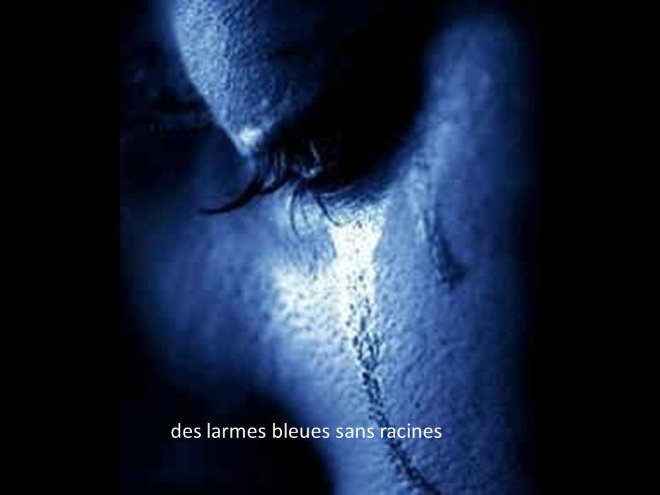 des larmes bleues sans racines
