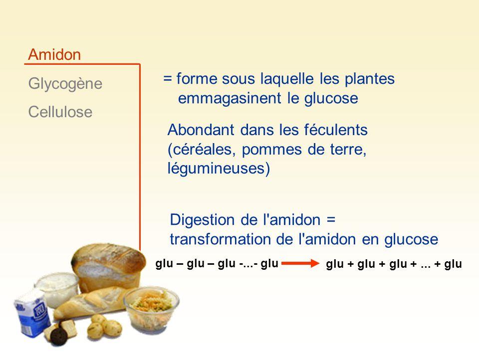 = forme sous laquelle les plantes emmagasinent le glucose