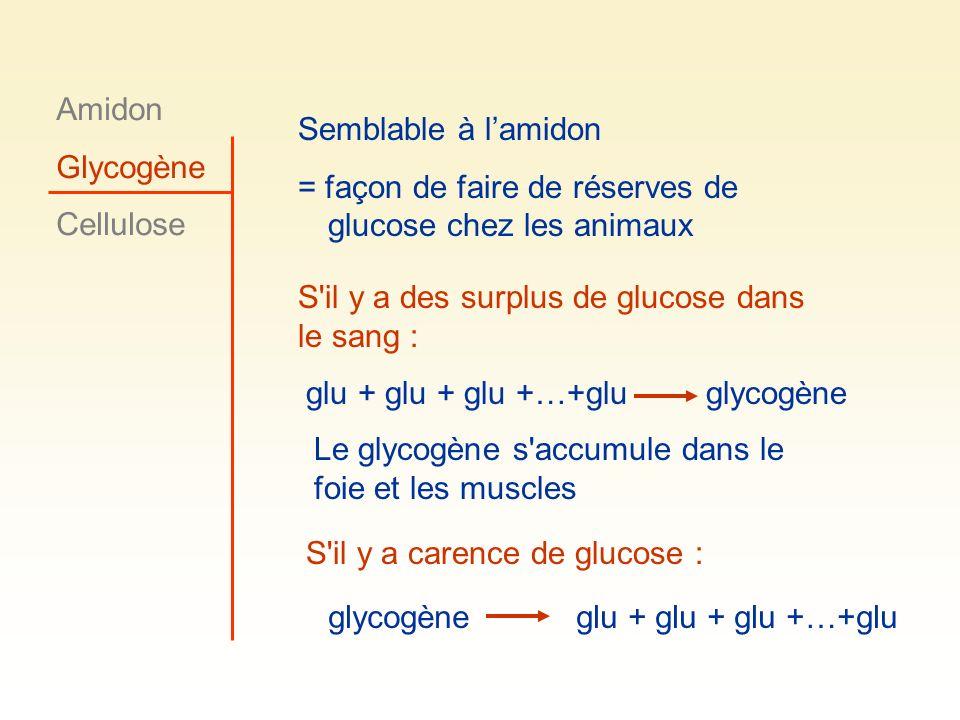 Amidon Glycogène. Cellulose. Semblable à l'amidon. = façon de faire de réserves de glucose chez les animaux.