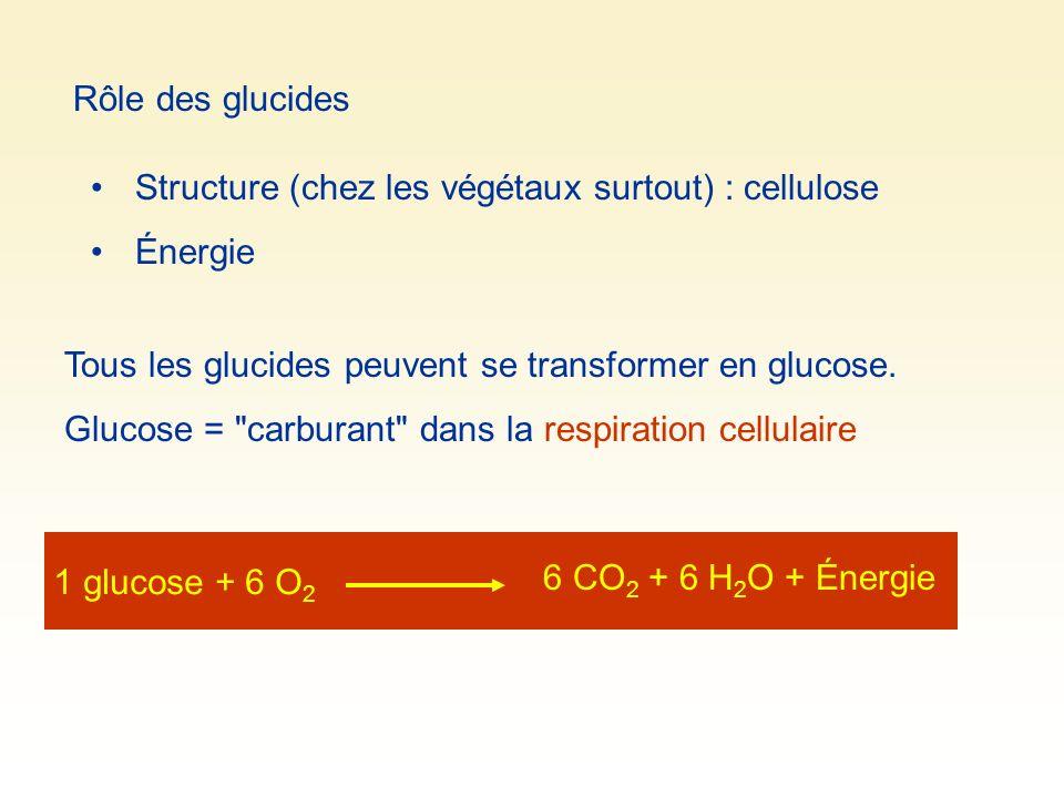 Rôle des glucides Structure (chez les végétaux surtout) : cellulose. Énergie. Tous les glucides peuvent se transformer en glucose.