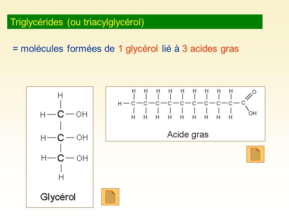 Triglycérides (ou triacylglycérol)
