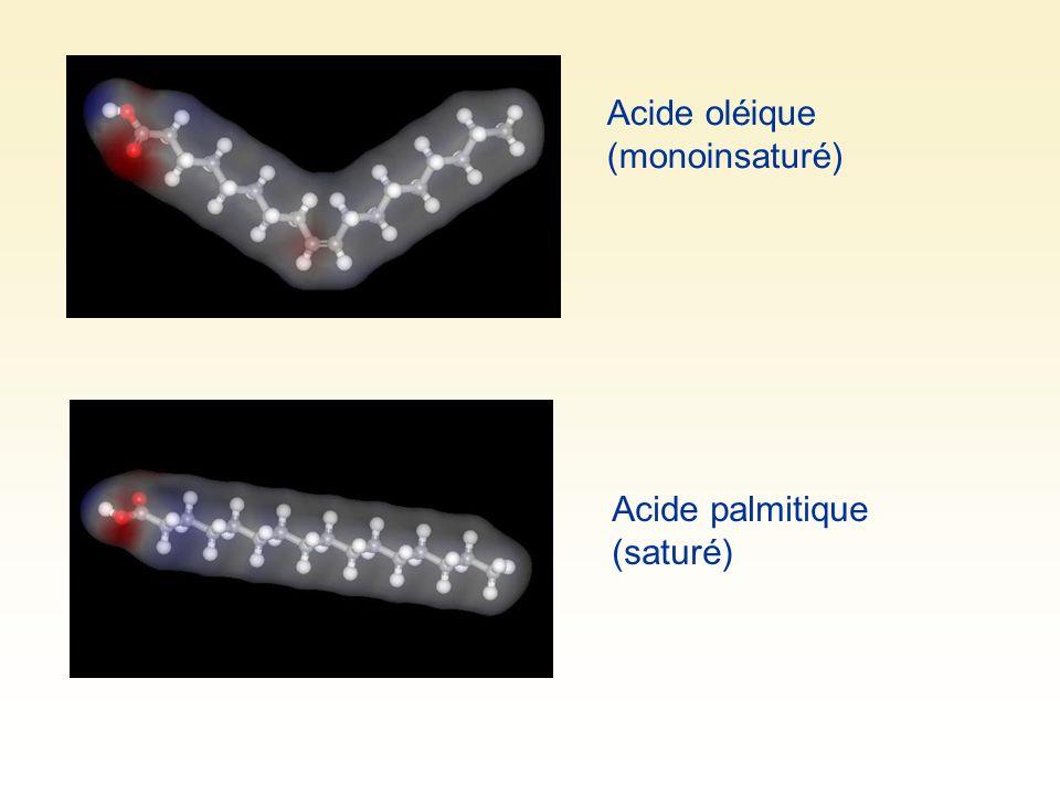 Acide oléique (monoinsaturé)