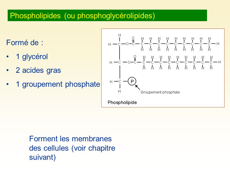 Phospholipides (ou phosphoglycérolipides)