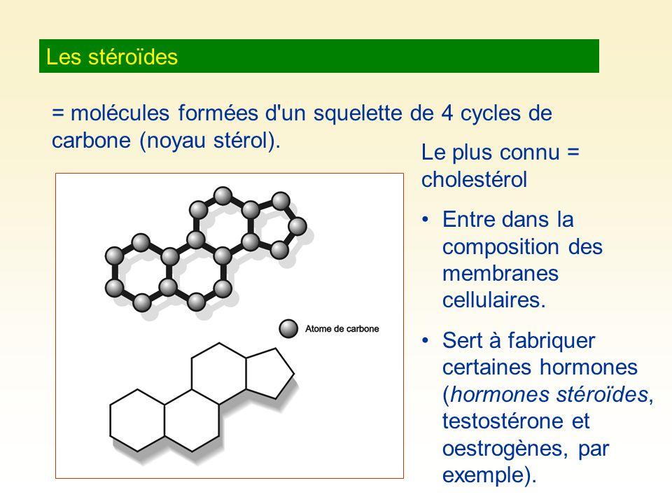 Les stéroïdes = molécules formées d un squelette de 4 cycles de carbone (noyau stérol). Le plus connu = cholestérol.