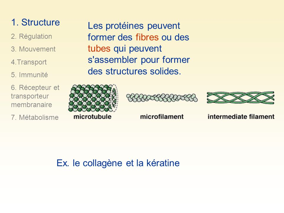 Ex. le collagène et la kératine