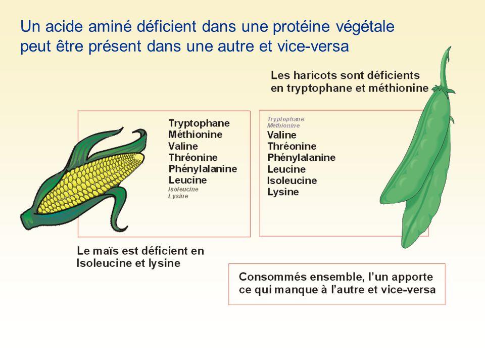 Un acide aminé déficient dans une protéine végétale peut être présent dans une autre et vice-versa